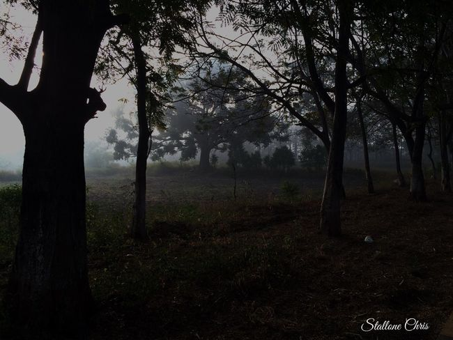 Early Morning in Forest Hanging Out Eyem Best Shots Eyemphotography EyeEm EyeEmBestPics EyeEm Best Shots - Nature EyeEm Nature Lover Eye4photography  EyeEm Best Shots IPhone Adventure 500px 2016 Instagram Nature IPhoneography Smart Simplicity The Explorer - 2014 EyeEm Awards Iphonephotography Nature_collection Peace Naturelovers Photography Relaxing Enjoying Life