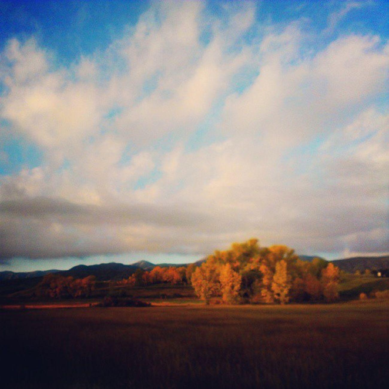 Gorgeous Fall Colorado colors Cowx Autumn denver