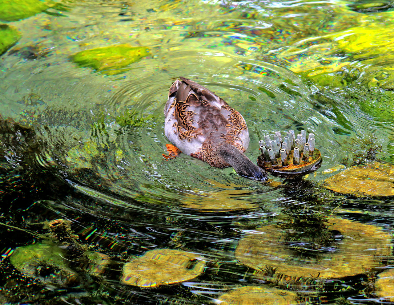 one animal, water, animals in the wild, animal themes, lake, waterfront, nature, animal wildlife, outdoors, no people, day, bird, swimming