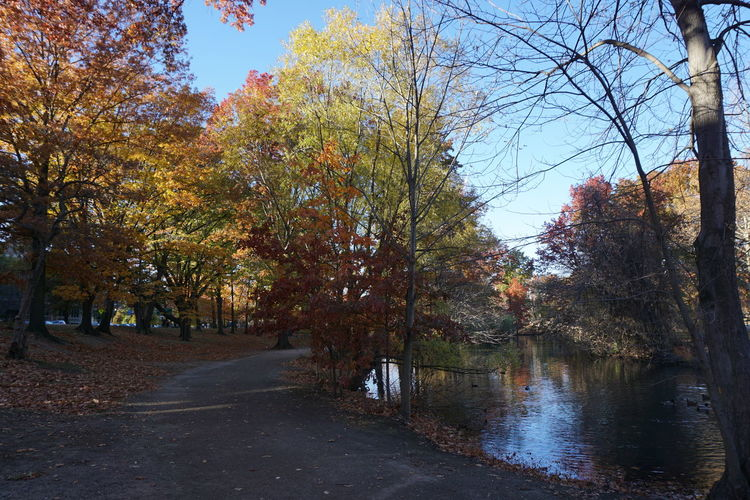 Walking Around Colorful Trees Lake View Outdoor Pictures