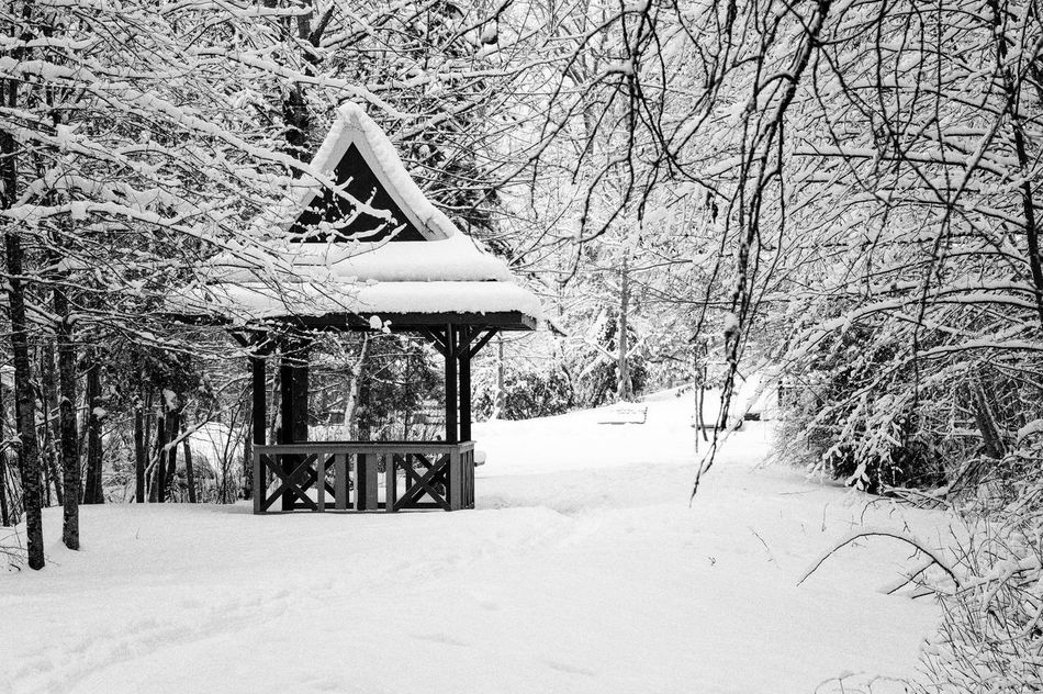 Architecture Bare Tree Beauty In Nature Built Structure Cold Temperature Covering Day Gazebo Nature No People Outdoors Pavilion Scenics Snow Snowing Tranquil Scene Tranquility Tree Winter