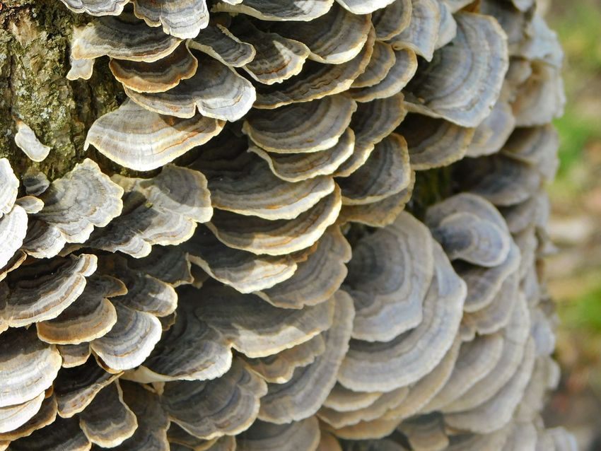 Textured  Close-up Pattern No People Stack Backgrounds Abstract Complexity Outdoors Nature Day Tree Fungus Tree Fungus Polyporus Squamosus Stalk Mushroom