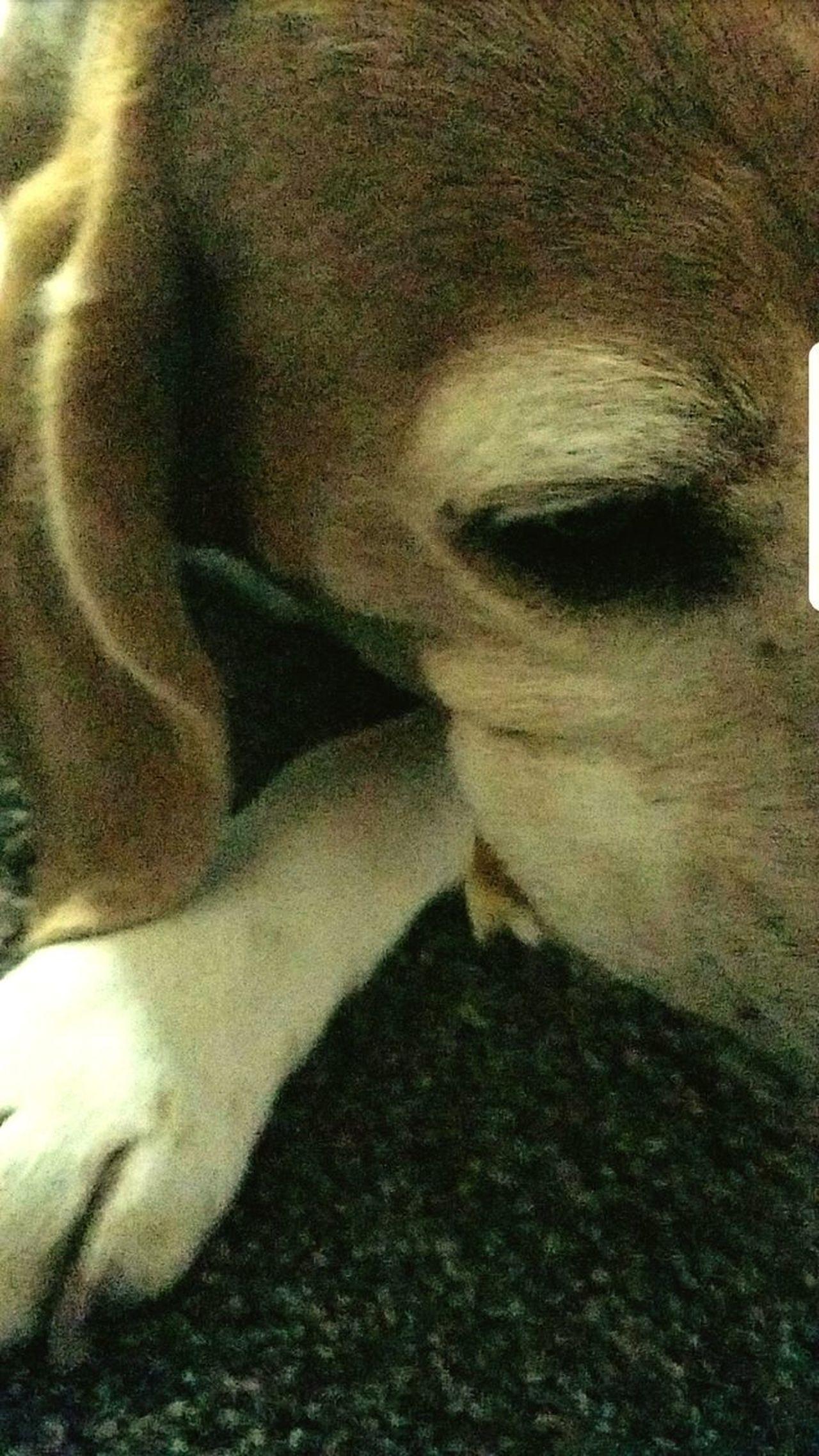 Beaglelife Beagle Love Dogs Of EyeEm Dog Portrait Beagle Dog Dog❤ Dog Love Beagles  Beaglelovers Beagles