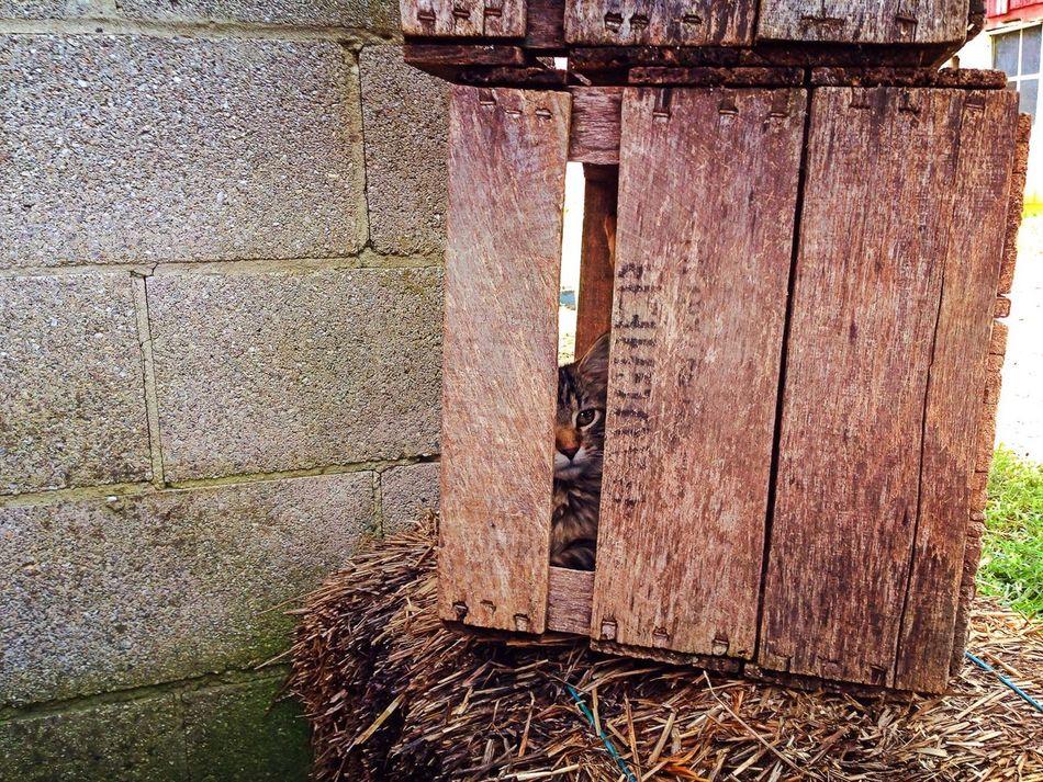 Beautiful stock photos of box, Animal Themes, Box, Built Structure, Cat