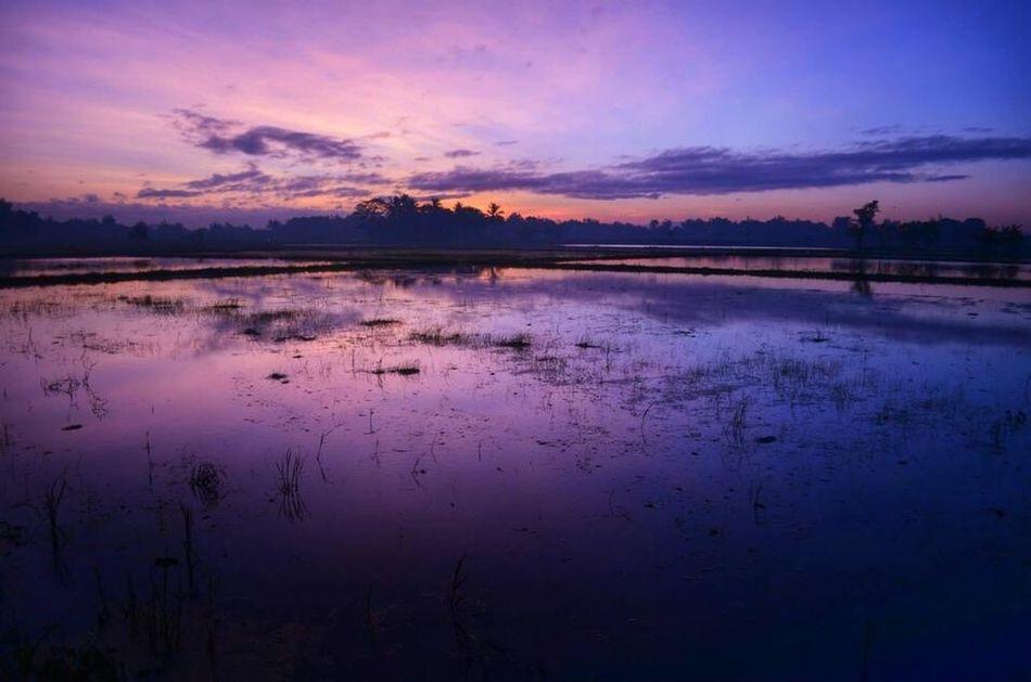 Sunrise Sunrise_Collection Rice Field Malolos Sunrise_sunsets_aroundworld Sunrise Colors