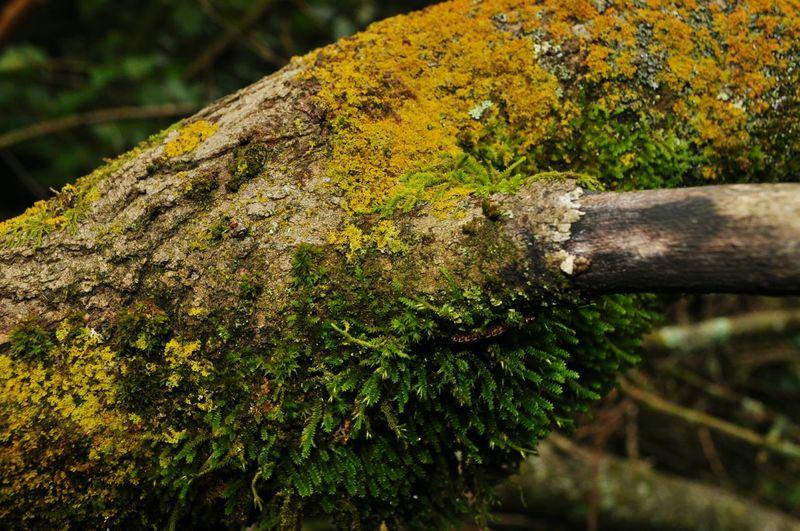 Taking Photos Multicolors  EyeEm EyeEm Nature Lover Nature_collection Eyeem Plants Alabama Wood Moss Branches
