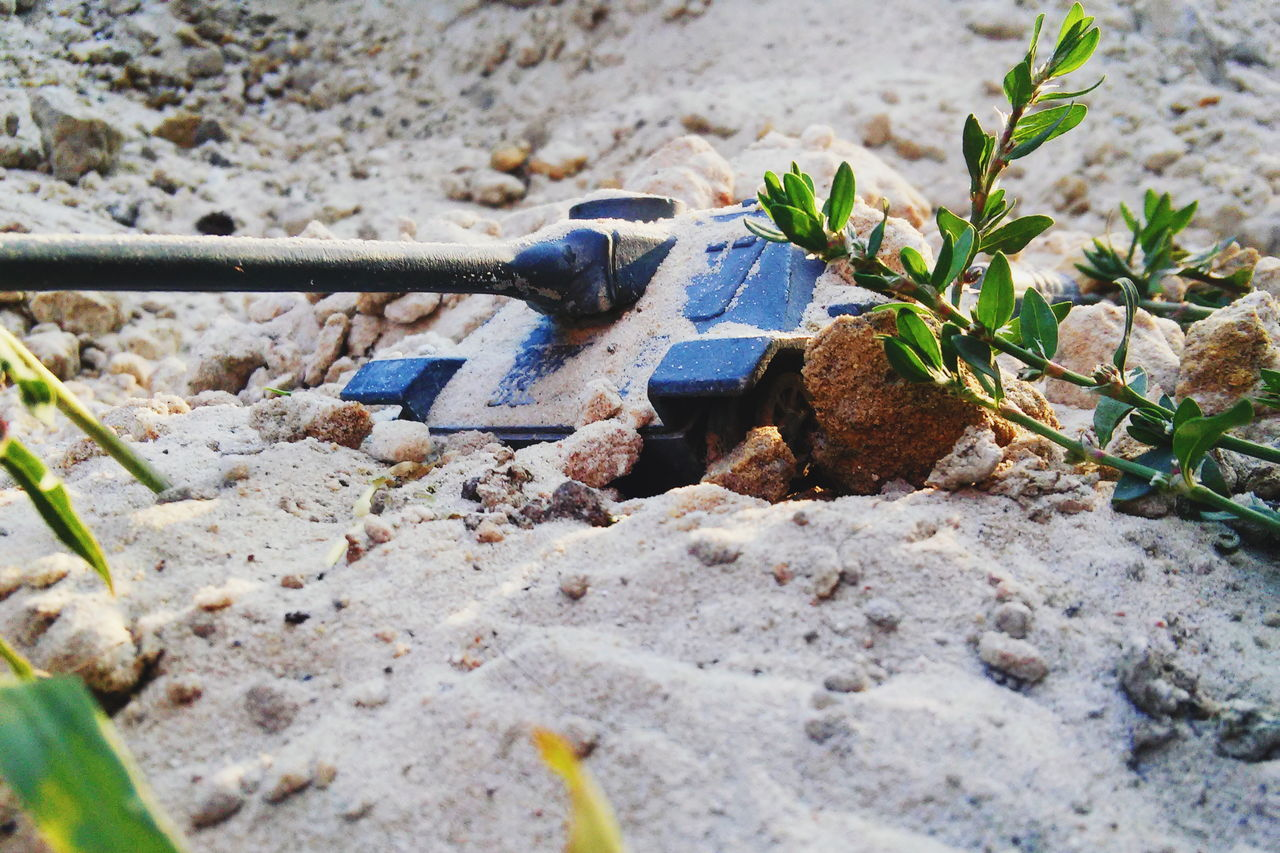 sand, no people, day, hand tool, outdoors, work tool, plant, nature, growth, close-up, sand pail and shovel