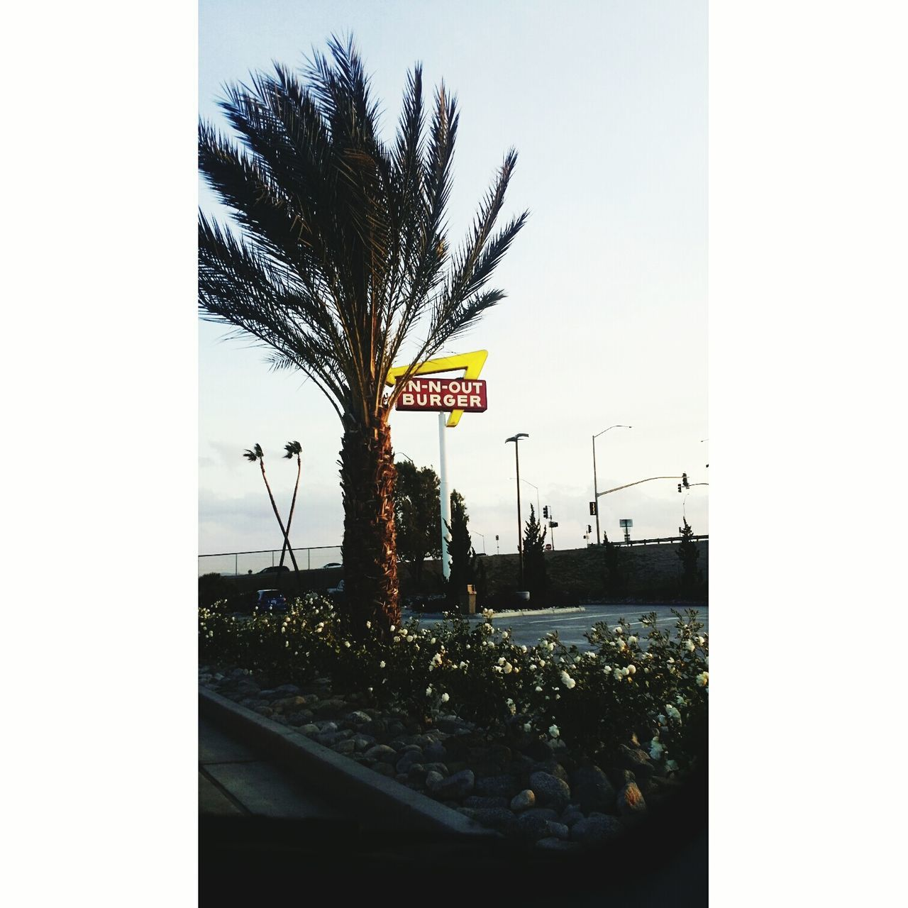 IN-N-OUT First Eyeem Photo