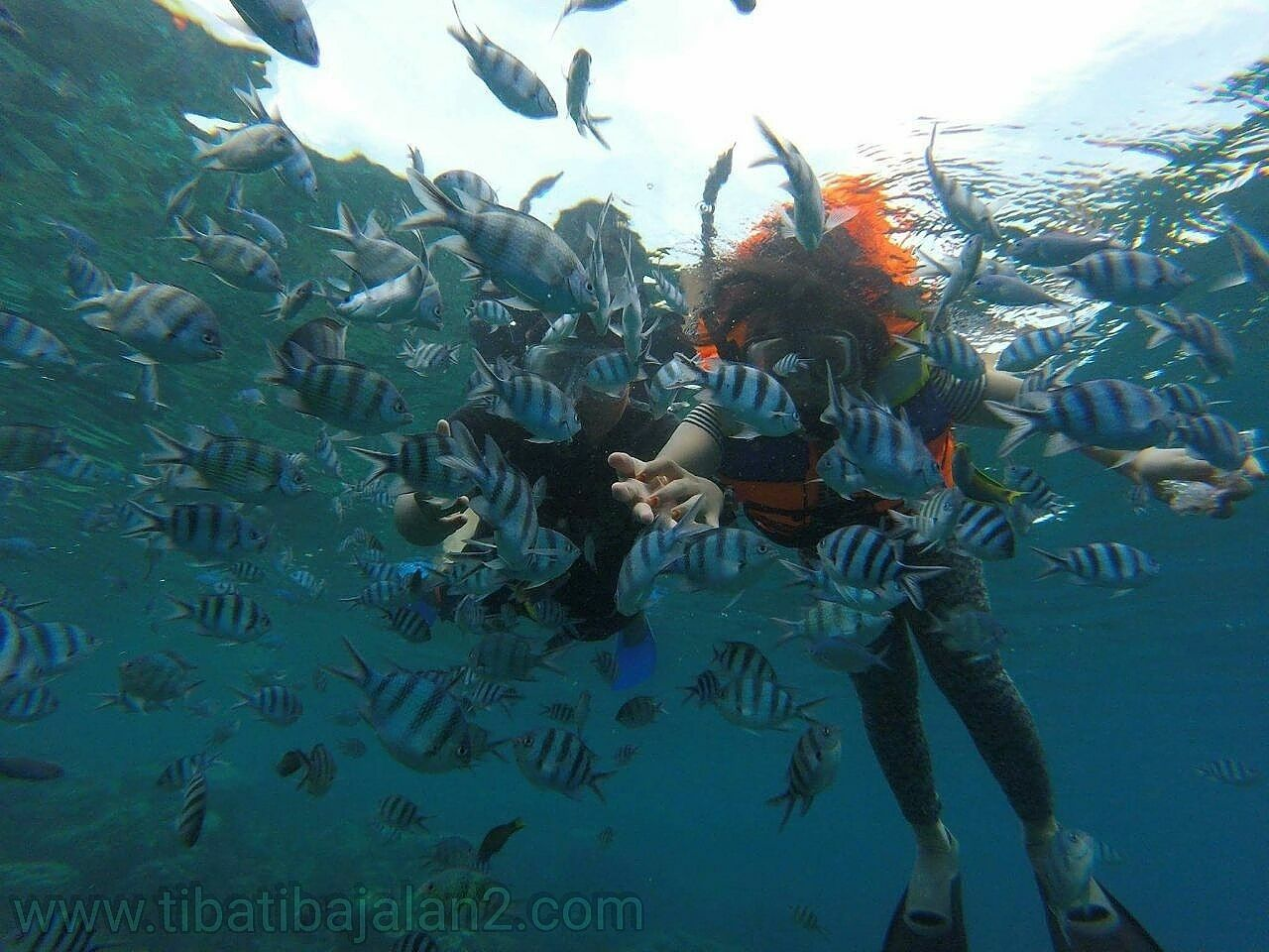 OpenTrip 3D 2N,, 27-29 Mei Only 960K/Pack meeting Point Lenteng Agung - Jakarta. 081368661594. www.tibatibajalan2.comOpentrip Nature Photography Sea_collection Indonesia_photography Wonderful Indonesia Visitindonesia Travel Destinations Travelphotography Traveling Indonesiatraveler Karimunjawaisland Karimunjawatrip