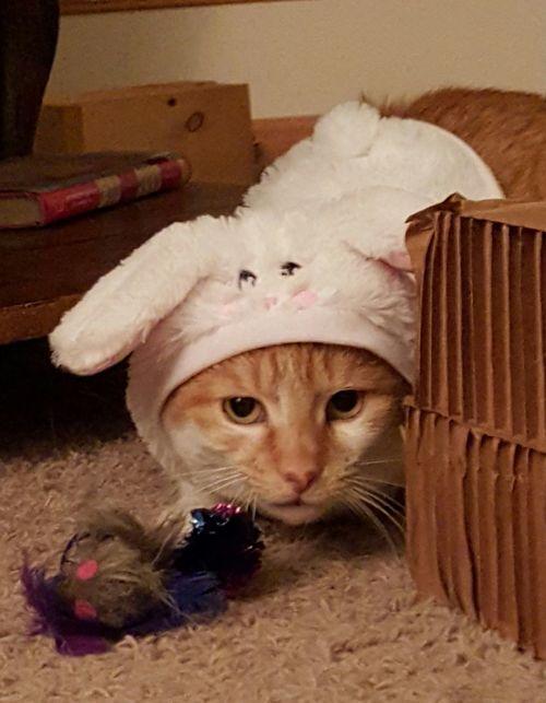 Cats Animals Disabledpet Pets Corner Lolcat