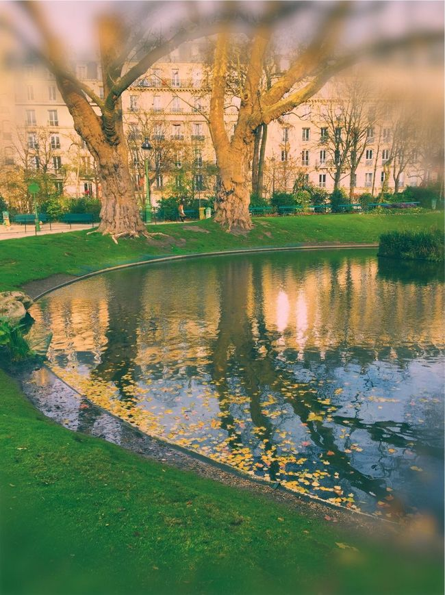 Nature Nature_collection Flowers,Plants & Garden Nature Photography Natural Beauty Naturelovers Naturephotography Paris ❤ Paris, France  Love Paris Paris Je T Aime Paris Je Suis Paris Je T'aime