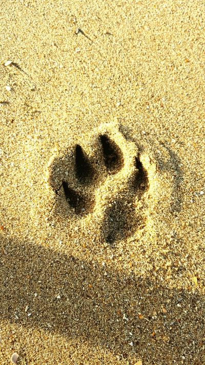 Dog Paw Sand & Sea At The Beach Bloemendaal OpenEdit Dogslife