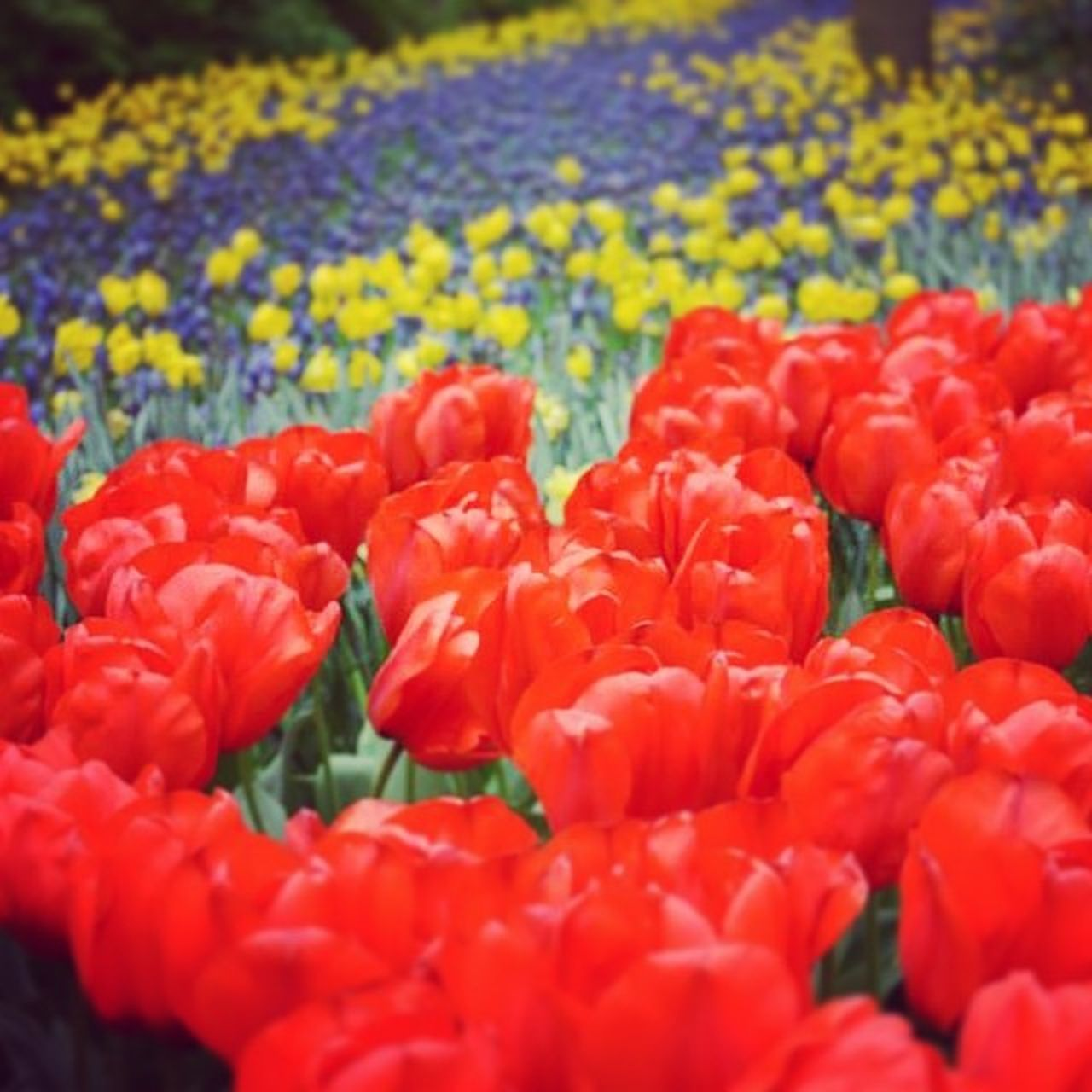Eurotrip TulipGarden The Portraitist - 2014 EyeEm Awards Keukenhoff