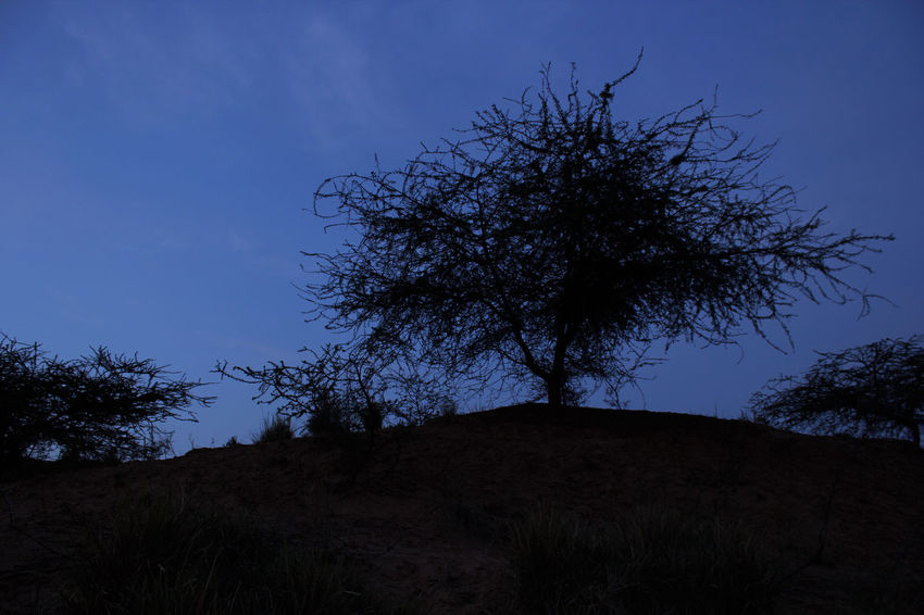 Abstract Twig Branches And Sky Branches And Shadow Branch Of A Tree Branch Daybreak Desert India Faint Low Angle View Nature No People Hill Trees Tree Lines Lines And Shadows Slihouettes Shadow Indianphotographer Indiapicture Lost In The Landscape Connected By Travel