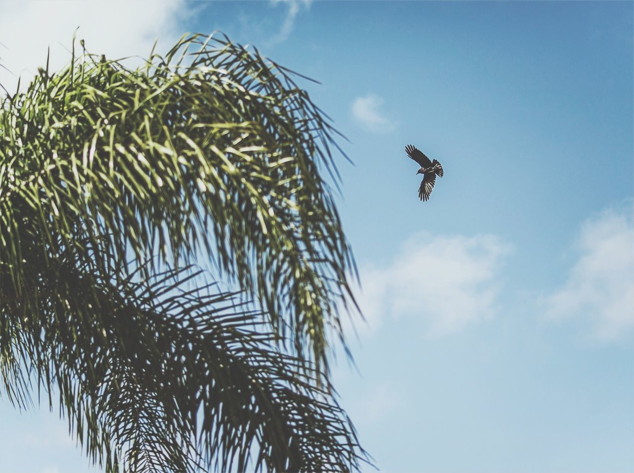 Birds Sky Low Angle View One Animal Day Nature Animal Themes Flying No People Outdoors Close-up Bird Liquor
