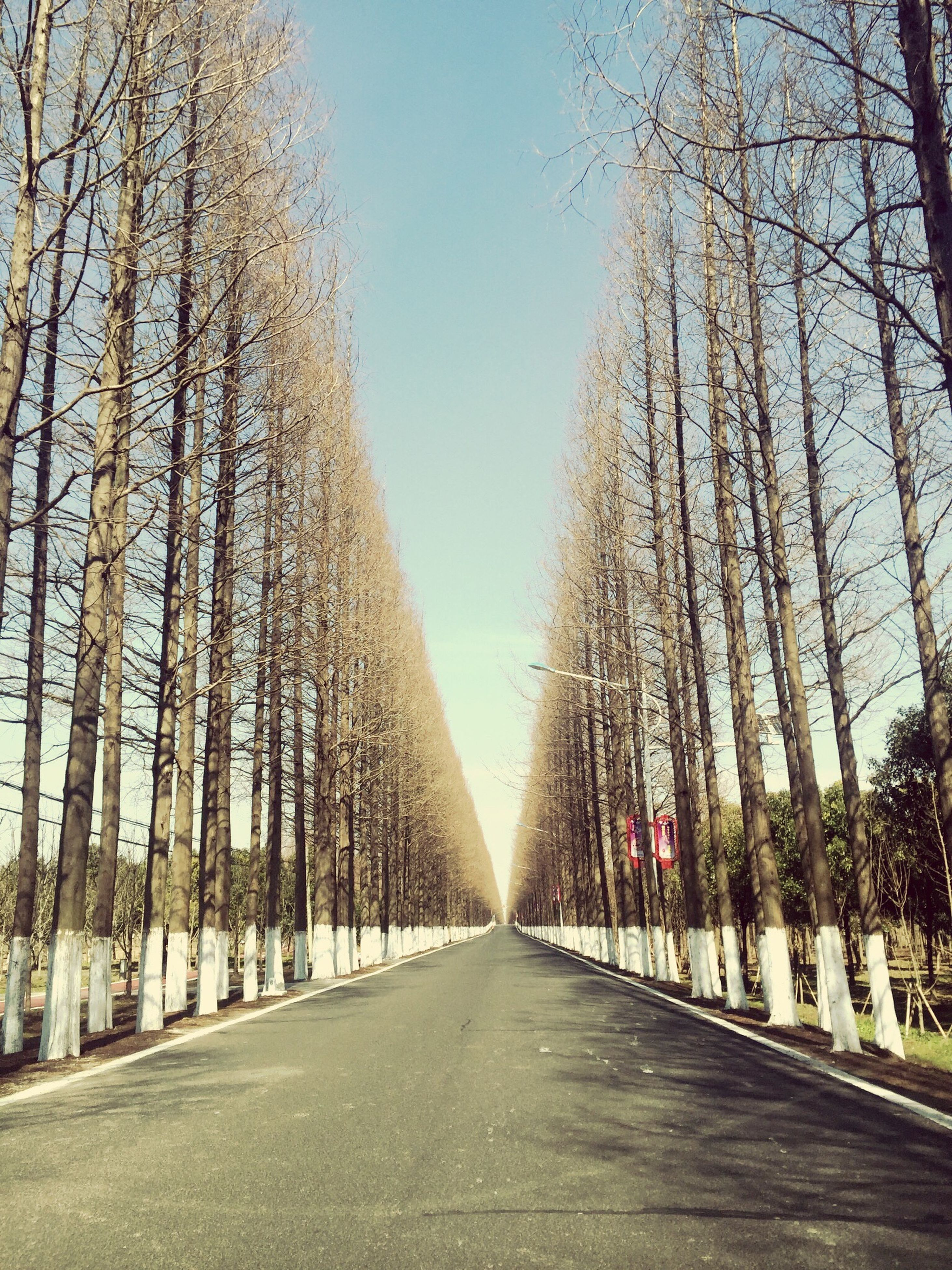 the way forward, tree, road, diminishing perspective, bare tree, day, clear sky, transportation, no people, outdoors, nature, sky, sunlight, tranquility, scenics, branch, beauty in nature