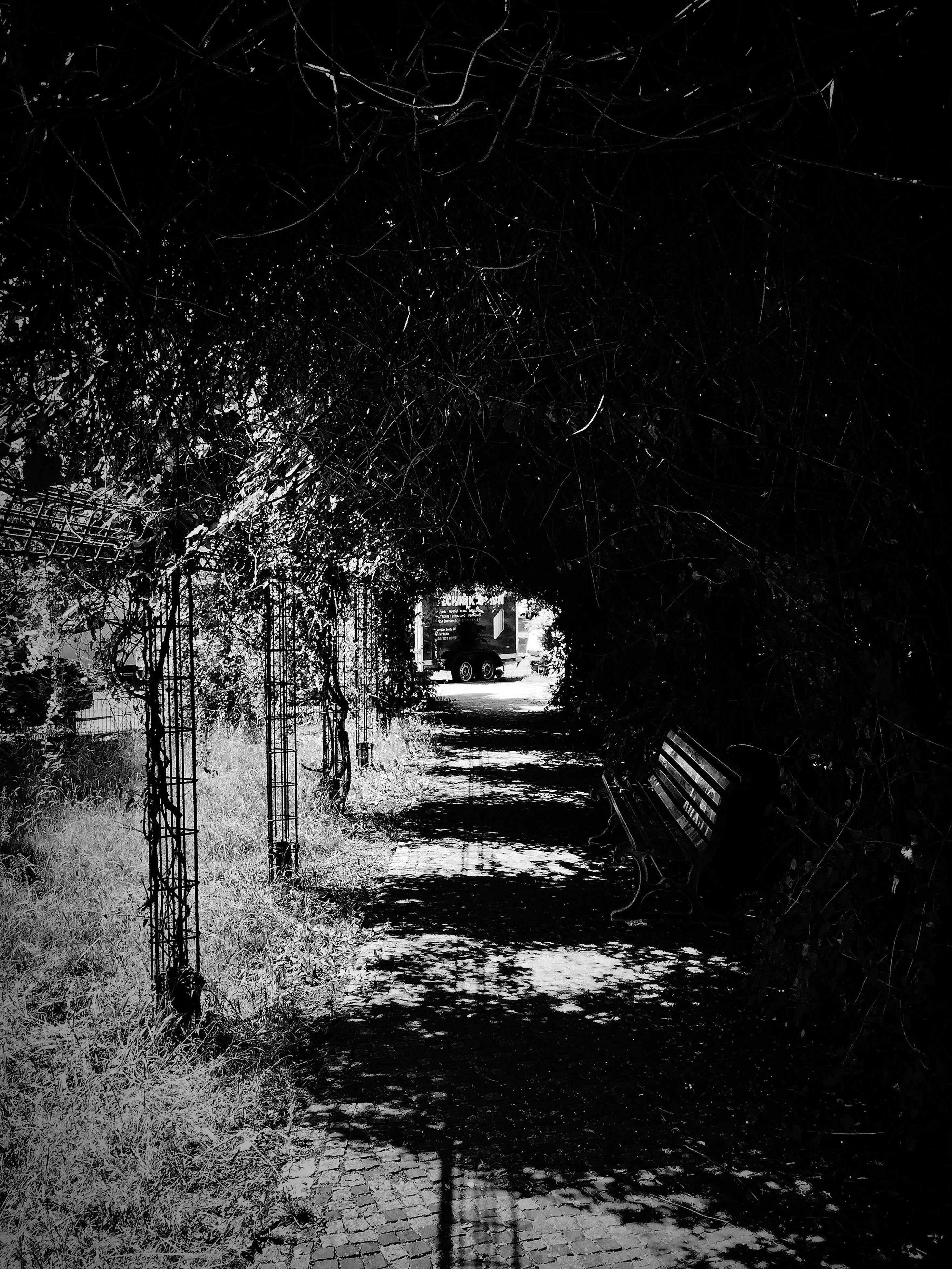 night, the way forward, illuminated, diminishing perspective, tree, dark, street light, built structure, vanishing point, architecture, walkway, street, steps, footpath, pathway, outdoors, empty, narrow, long, lighting equipment