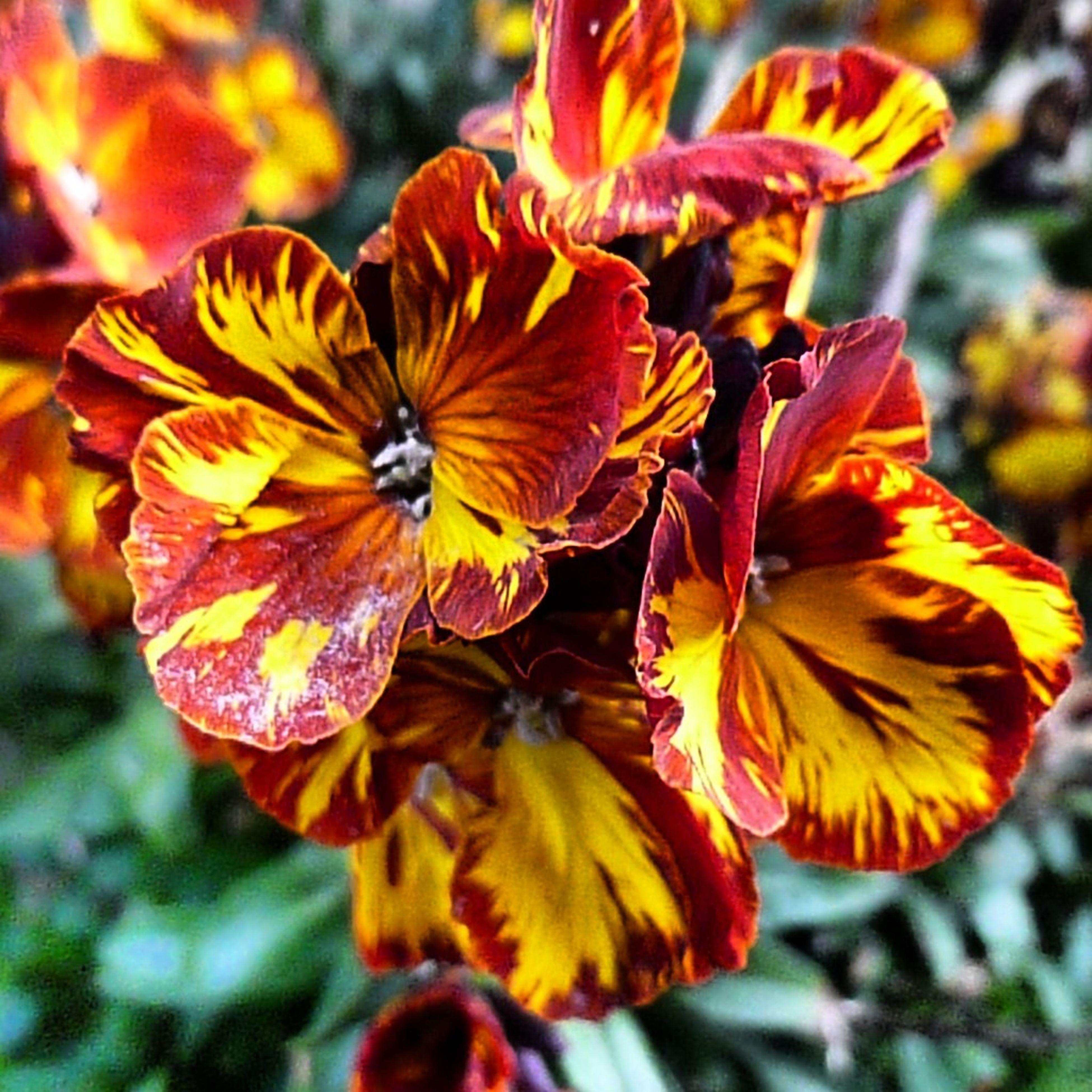 Flowerporn EyeEm Nature Lover Simply:-)