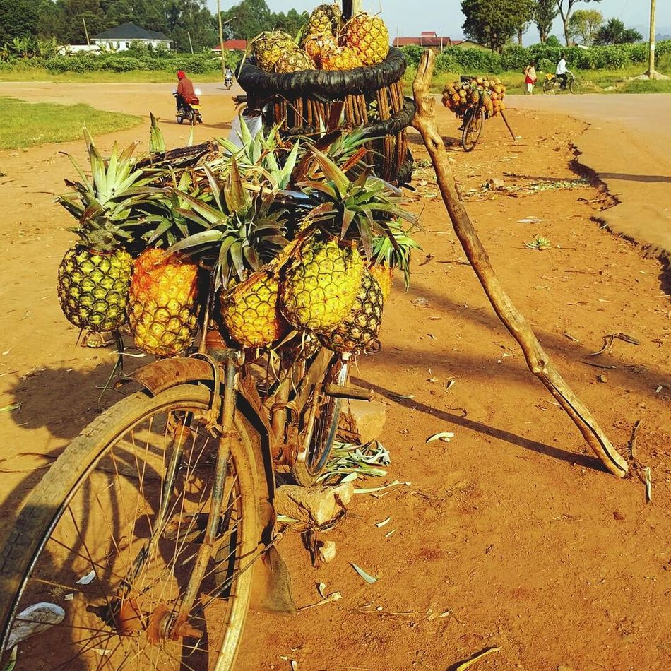 Bicycle Pinapples Outdoors Nature Fruit Beauty In Nature