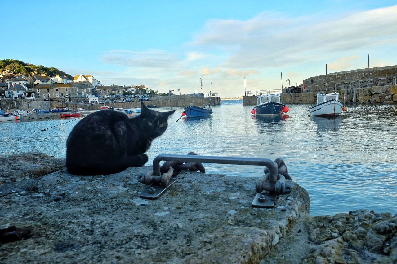 Sky One Animal No People Sea Water Animal Themes Outdoors Mammal Day Blue Local Black Cat Bay Blue Sky United Kingdom Scenic Reflections Boats Cornwall Cat Reflection Water Reflections From My Point Of View Harbour Life Clouds