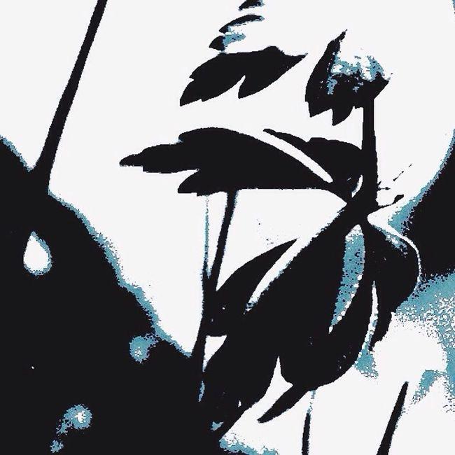 Flowers Spring Hvitveis