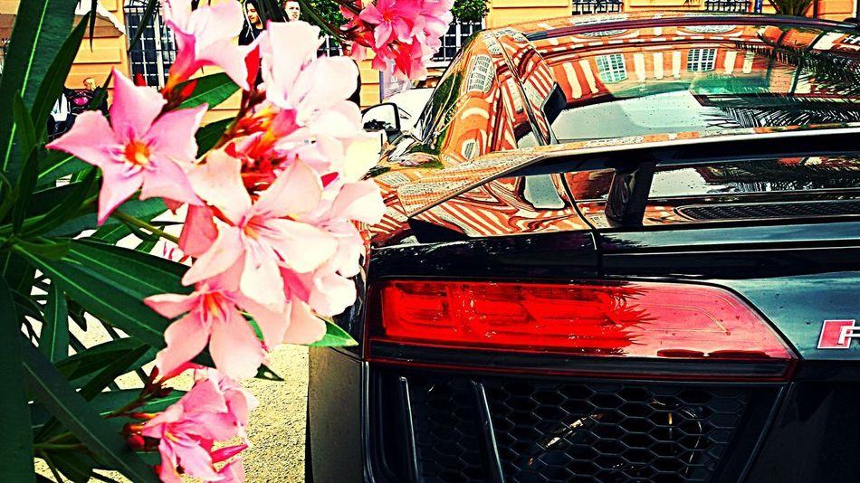 The Street Photographer - 2016 EyeEm Awards CarShow cars #car #ride #drive #tagsforlikes #driver #sportscar #vehicle #vehicles #street #road #freeway #highway #sportscars #exotic #exoticcar #exoticcars #speed #tire #tires #spoiler #muffler #race #racing #wheel #wheels #rim #rims engine horsepower Carselfie Carsandcoffee