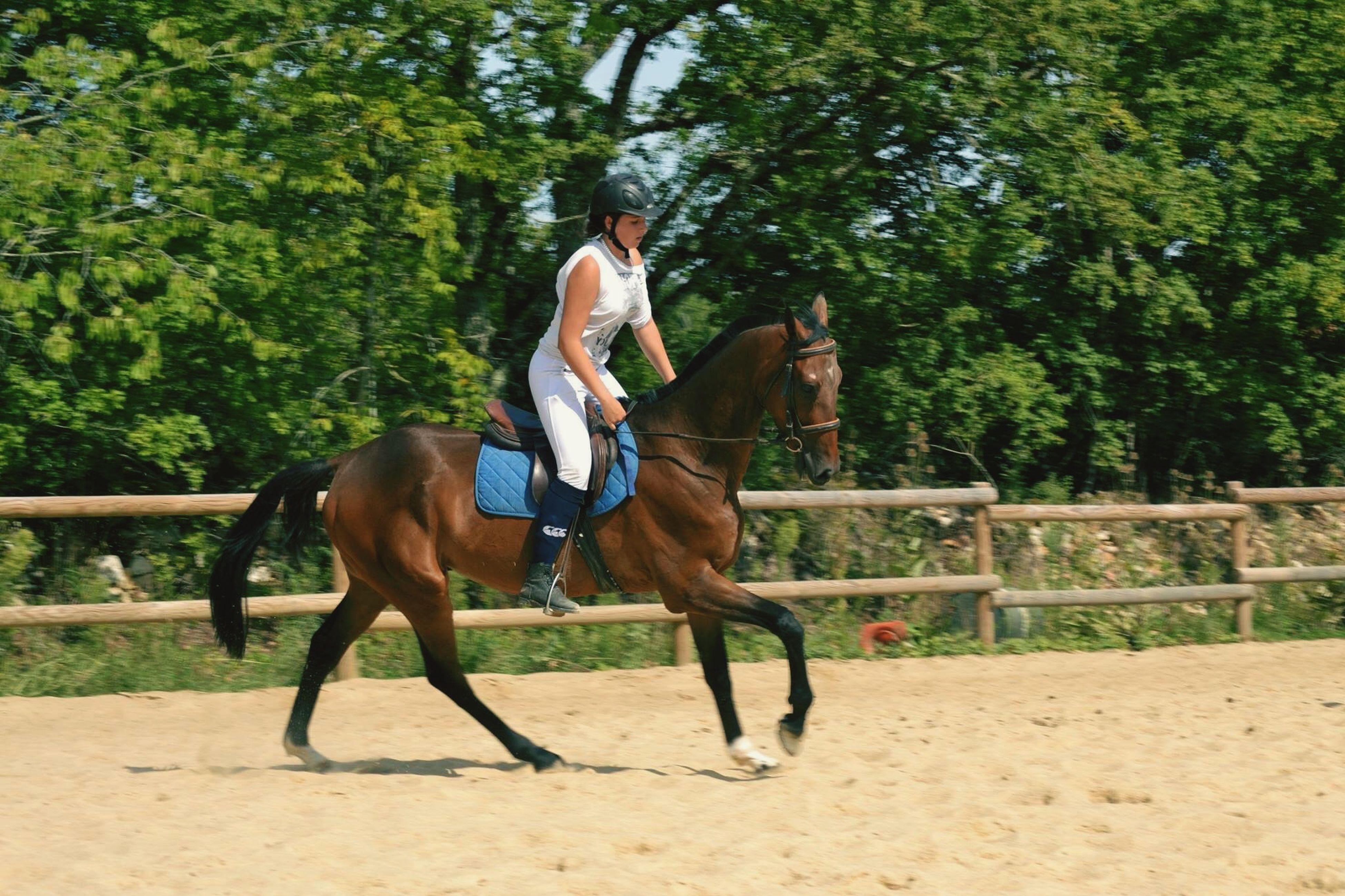 horse, animal themes, domestic animals, mammal, one animal, tree, working animal, full length, two animals, herbivorous, standing, sunlight, men, pets, livestock, dog, riding, day