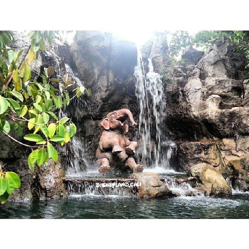 Junglecruz