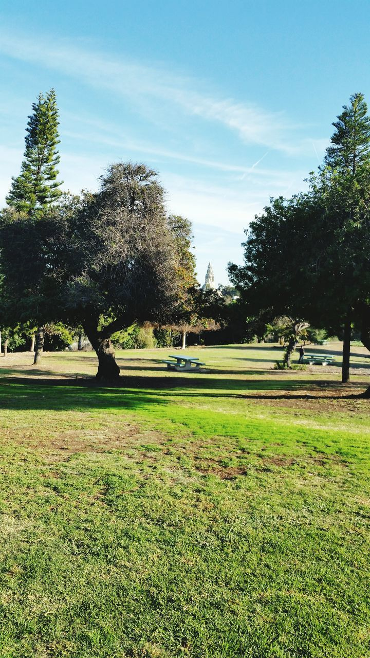 Trees And Grass In Park
