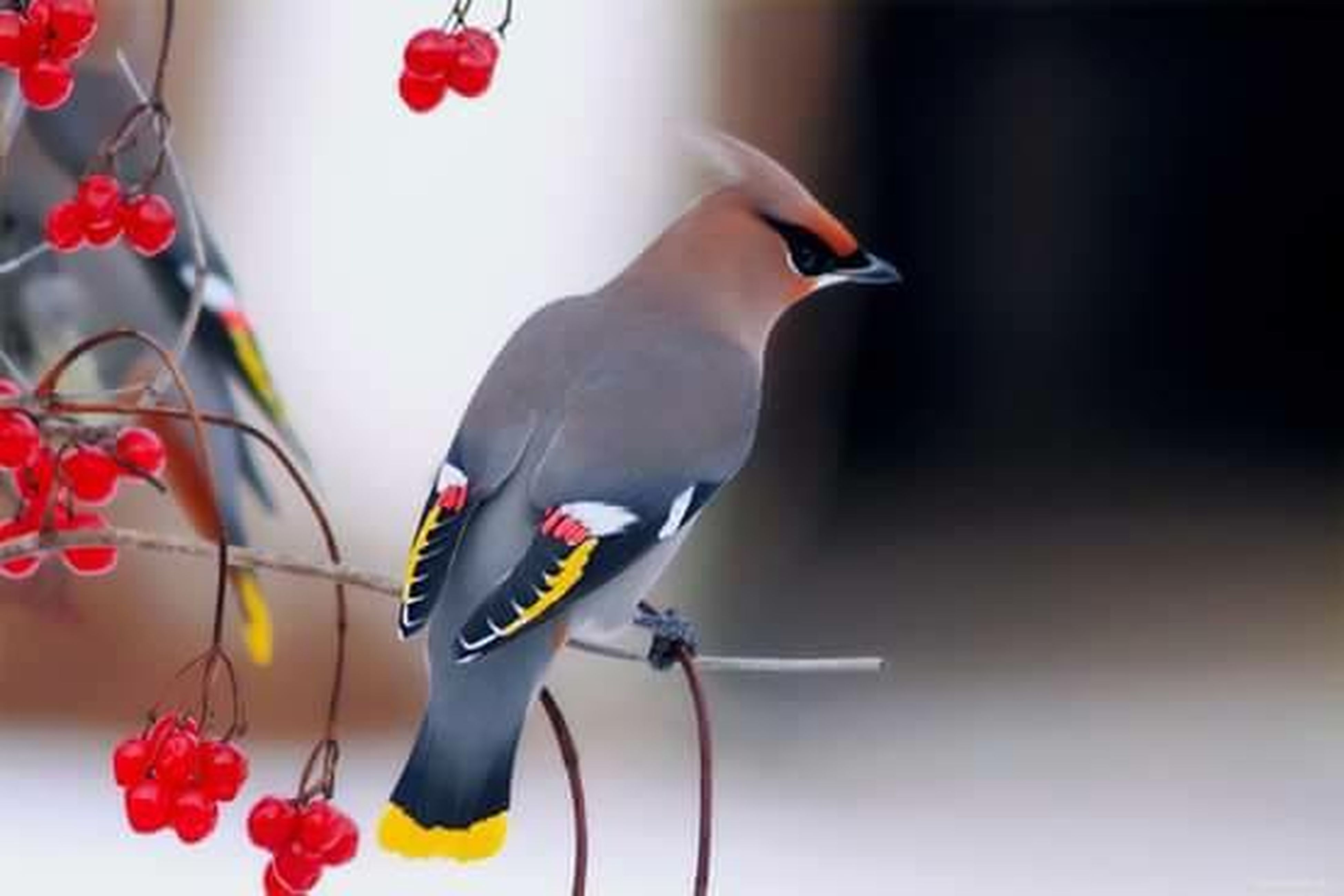 indoors, red, bird, hanging, wall - building feature, home interior, table, close-up, animal themes, decoration, no people, focus on foreground, animal representation, wall, vase, one animal, flower, day, sunlight, art and craft
