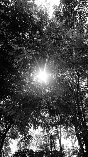 Tree Green Sun Forest Sky Happiness First Eyeem Photo Fine Art Photography 43 Golden Moments The Week Of Eyeem Flower Trees Minimalism Texture Enjoying Life Kerestinec Summer Focus Hanging Out Blackandwhite My Year My View