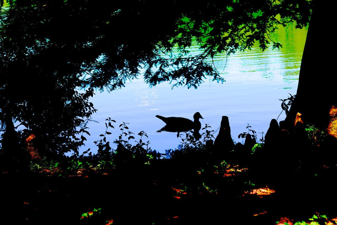 Silhouette Bird By Lake Against Sky During Sunset