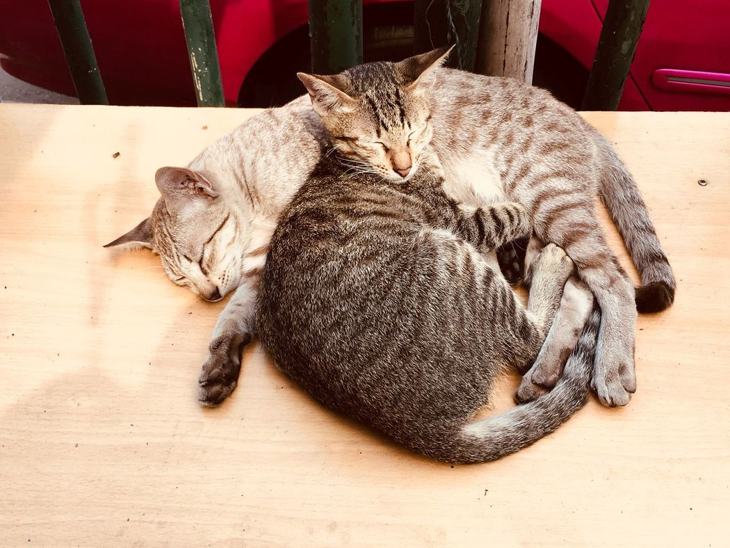 Take a nap Domestic Cat Feline Animal Themes Cat Pets Lying Down Sleeping Mammal Resting Domestic Animals Relaxation Indoors  No People Day Close-up