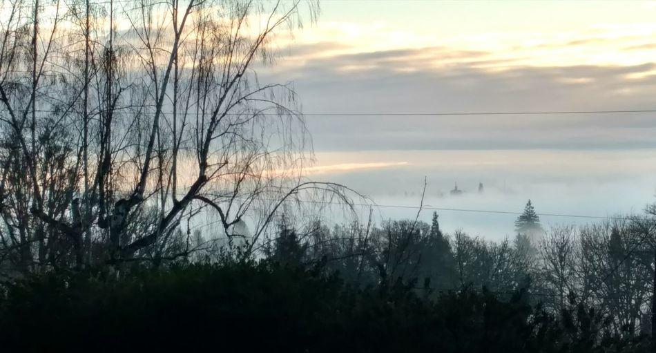 Tree Nature Outdoors Beauty In Nature Cloud - Sky No People Tranquility Scenics Day Sunrise Fog Taking Photos