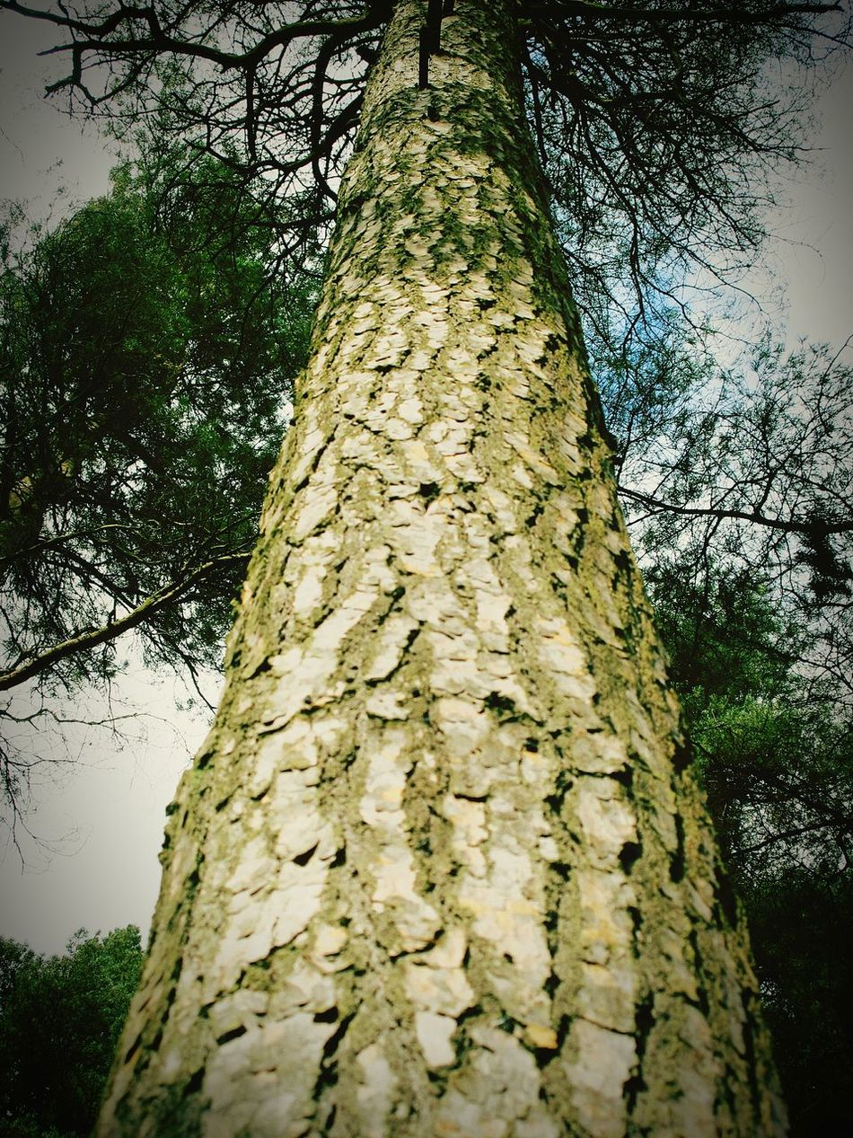 Freedom found within nature Capturing Freedom Freedom Upshot Talltrees Pinetrees Foliage Natureonyourdoorstep WoodLand Refreshing Atmosphere Leaves