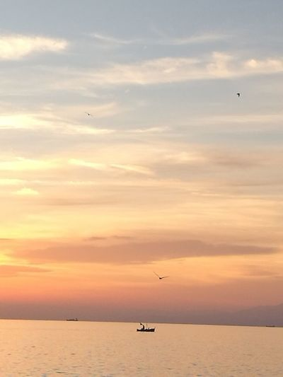 Sunset Silhouette Flying Sky Landscape Dramatic Sky Bird Sun Sea Dusk Nature Horizon Over Water Beauty In Nature Animal Wildlife Business Finance And Industry Cloud - Sky Tranquil Scene Sunlight Outdoors Travel Destinations