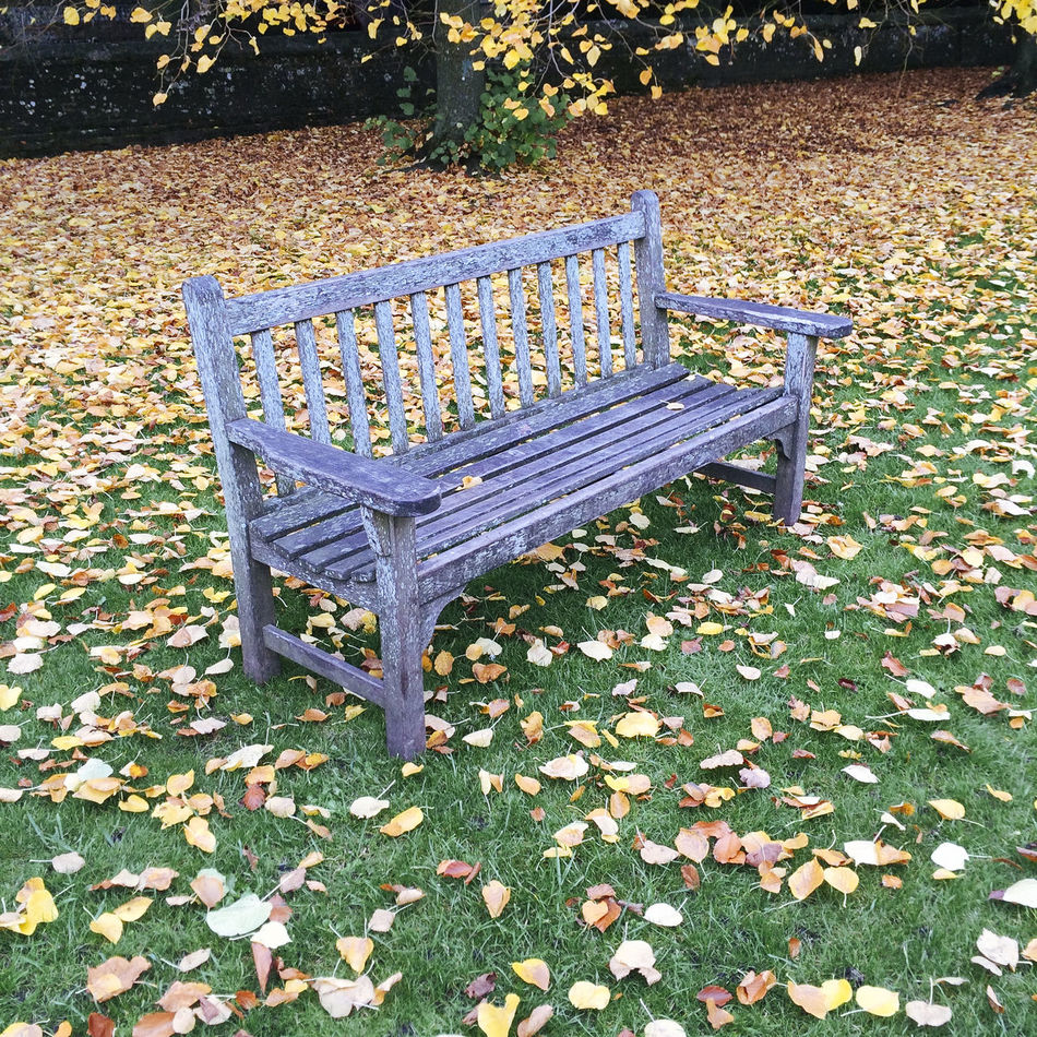 Empty park bench on grass surrounded by Autumn leaves Absence Autumn Autumn Leaves Bench Emptiness Empty Empty Park Bench Empty Seat Fall Leaves Grass No People Park Park Bench Park Bench Peace Peaceful Peaceful Place Quiet Seat Sitting Space Tranquil Tranquillity Vacancy Vacant