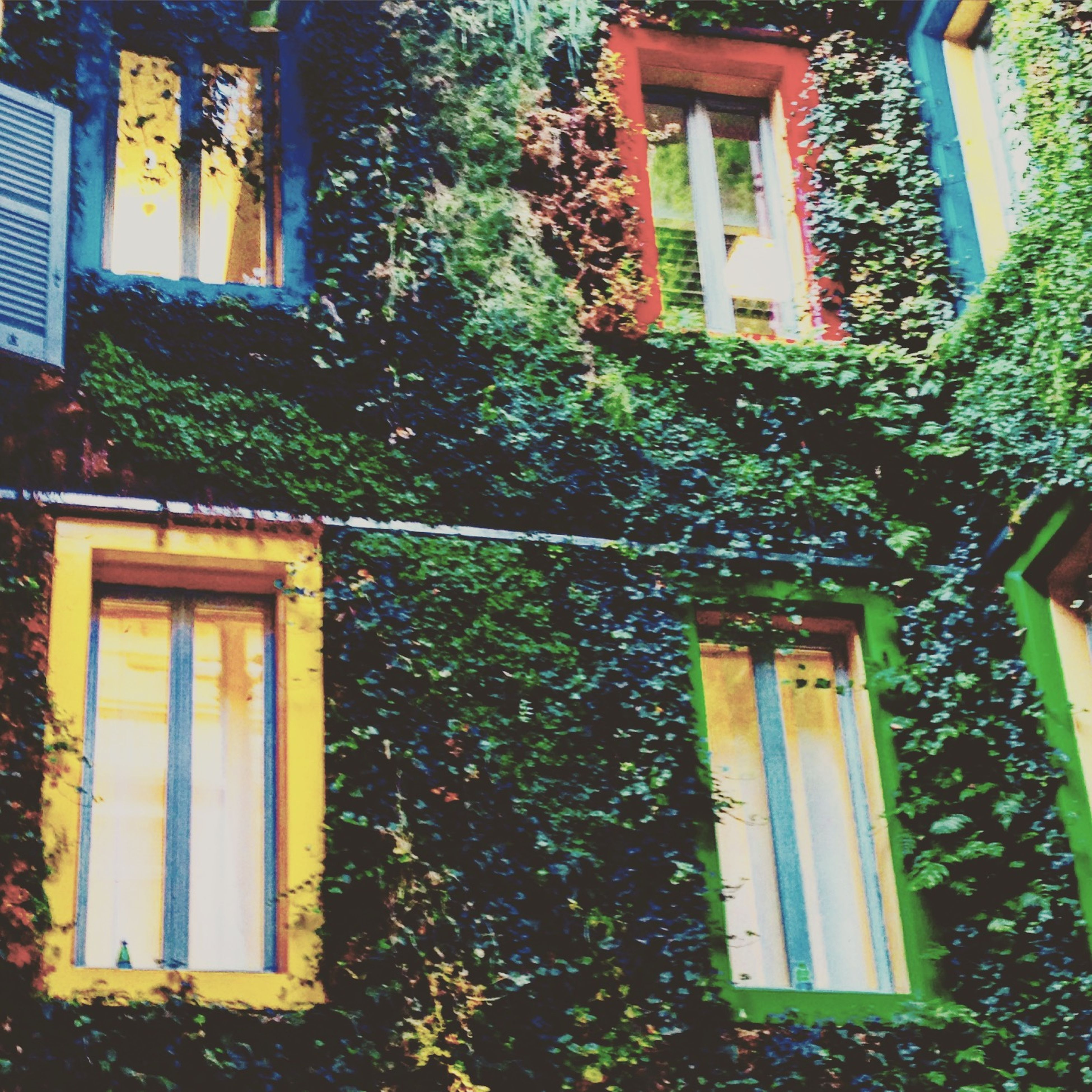 window, building exterior, architecture, built structure, house, residential building, residential structure, growth, ivy, tree, plant, door, potted plant, no people, balcony, day, closed, outdoors, facade, full frame