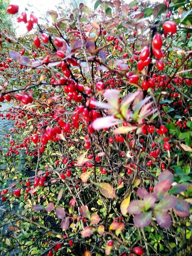 Jestpieknie Kocham Jesień Nie Wiem Co To Ale śliczne Najlepiej 💋💖👀 First Eyeem Photo