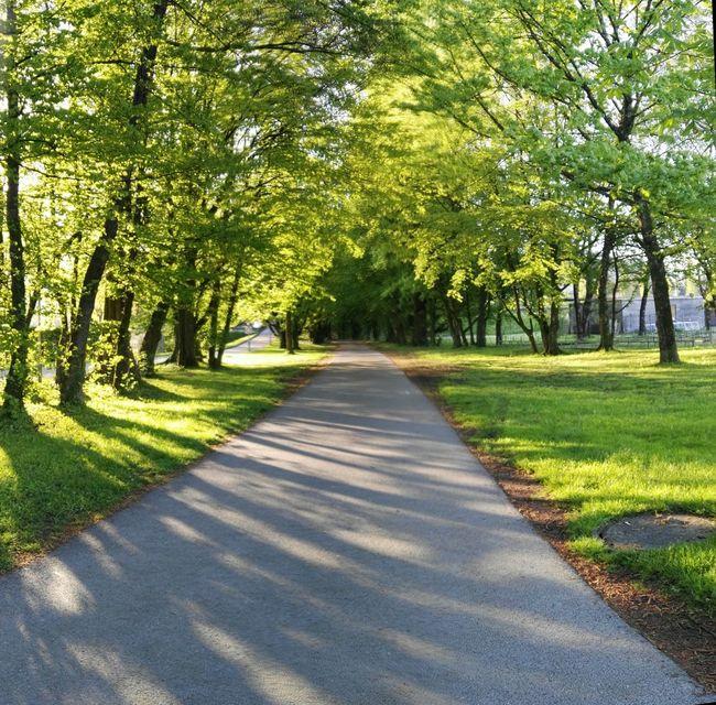 Fahrradweg, Sunshine Walking Around Bregenz
