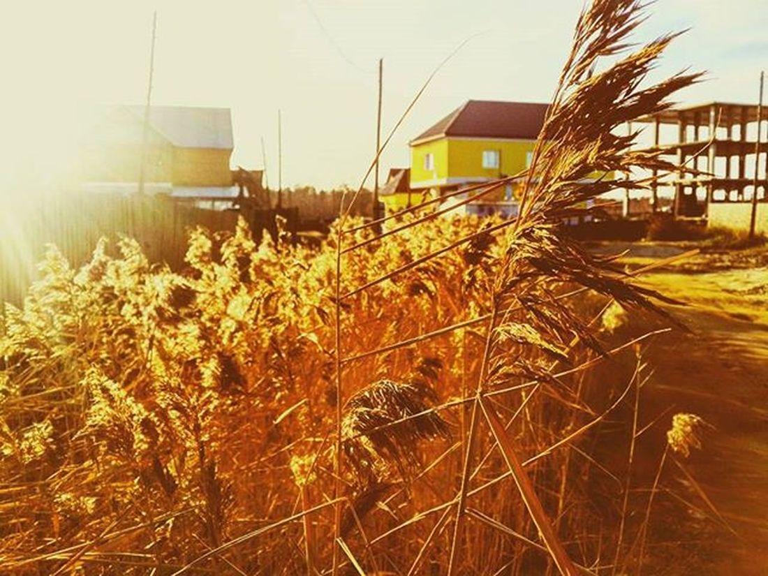 осень золотаяосень Autumn Goldenautumn October октябрь Beautifulphoto Photo Wonderful