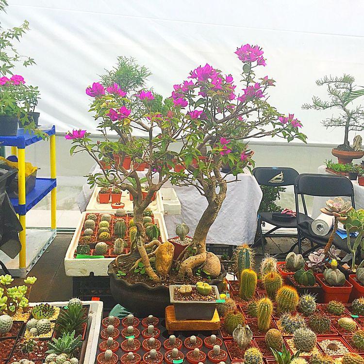 Flowers Flower Flowerporn Flowerpower Flower Collection Flower Head Mexico Cdmx Color Colorful Colors Colours