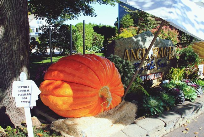 Sadly, not the first time I've heard those words. Big Pumpkins Maine Tadaa Community