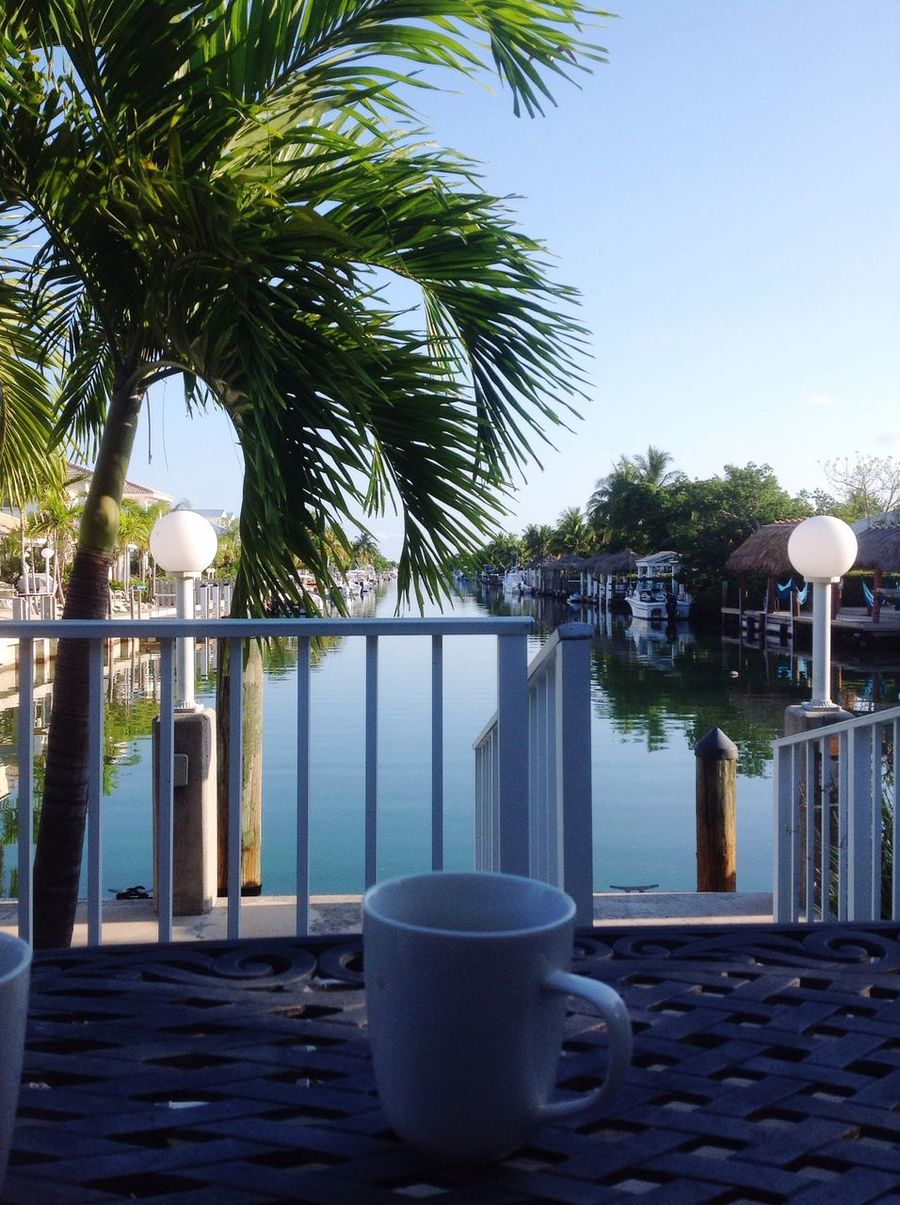Good morning from paradise. Florida Keys Morning Coffee Palm Tree Canal Home Vacation First Eyeem Photo