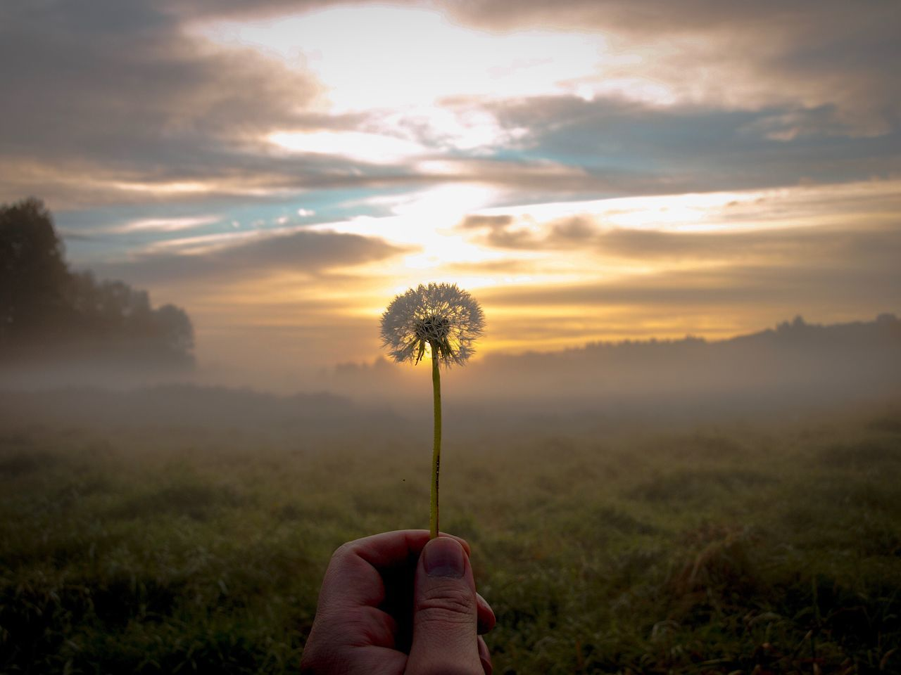 Dewy morning Human Hand Beauty In Nature Nature Sky Growth Dandelion Fog Sunrise