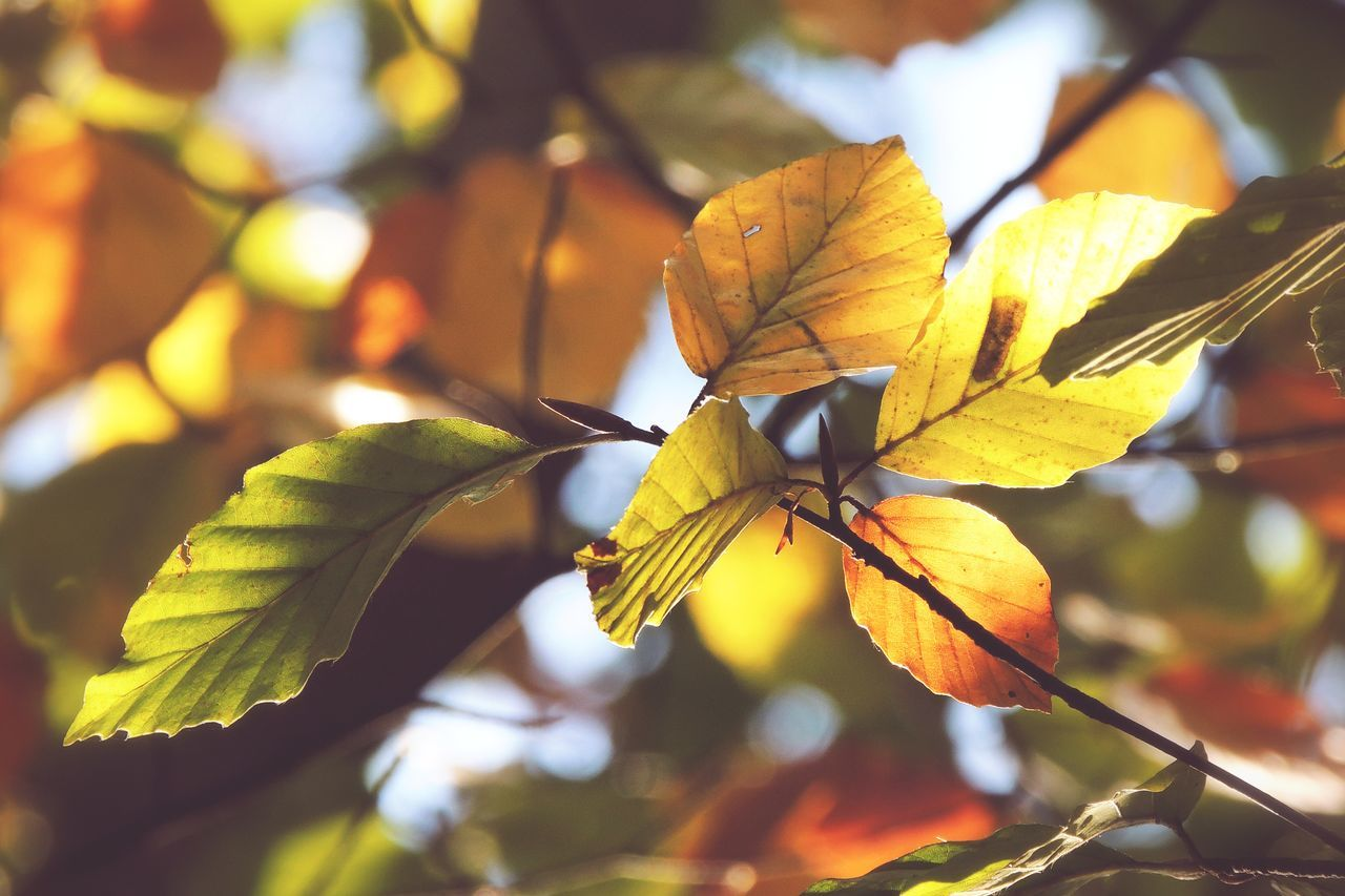 G o t t a L o v e O c t o b e r 🍁🍂 Tadaa Community | P510 | Eye Em Nature Lover | Nature | Nature_collection | Fall Beauty | Showcase: November | Leaves | Autumn | EyeEm Best Shots - Nature