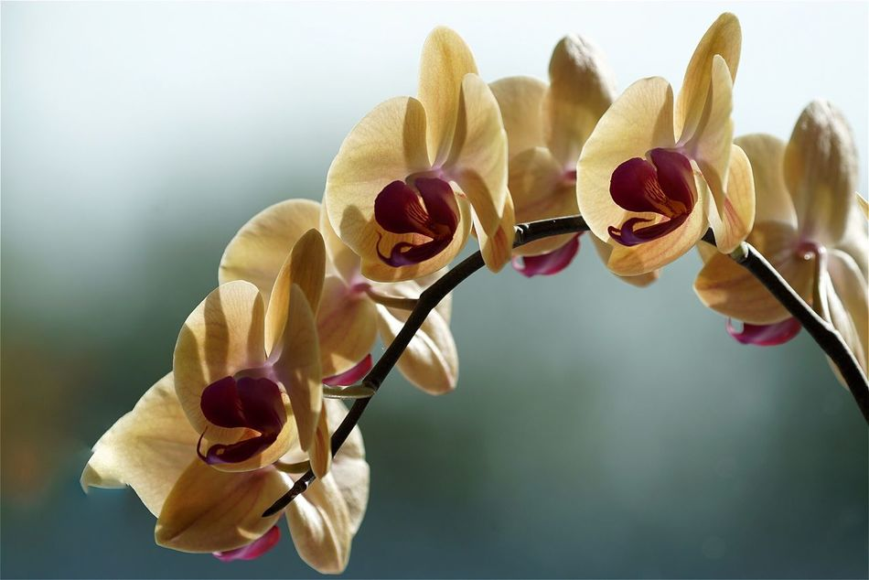 Beautiful stock photos of orchid, Beauty In Nature, Berlin, Blooming, Botany