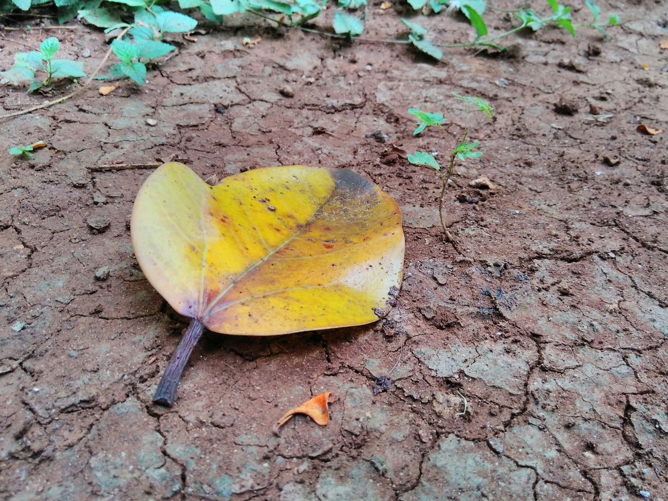 Nature Nature At Your Doorstep Tree Leaf 🍂 Germinated Still Life Natural Nature_collection