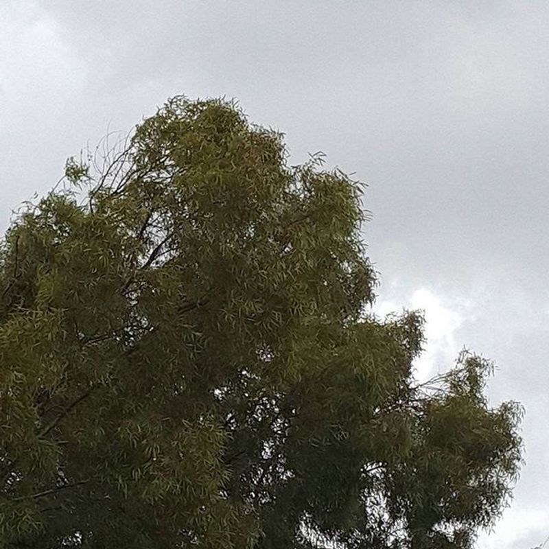 كَوَّنُوا شَيْئًا جَمِيلًا بِحَيَاةِ مَنْ يَعْرُفُكُمْ، وَيَكْفِي أَنْ لَنَا رَبَا يُجَازِينَا بِالْإحْسَانِ إحْسَانًا ~! Khadeja..☺😘💞💟👍👍 Night Instadaily Tree Sky Rain Goodnight Fottuto F Green تصويري  صورة_اليوم مساكم هشتاقات_انستقرام هشتاقات مساء الخير  Note4 هشتاقات_انستقرام_العربية تصوير  صورة
