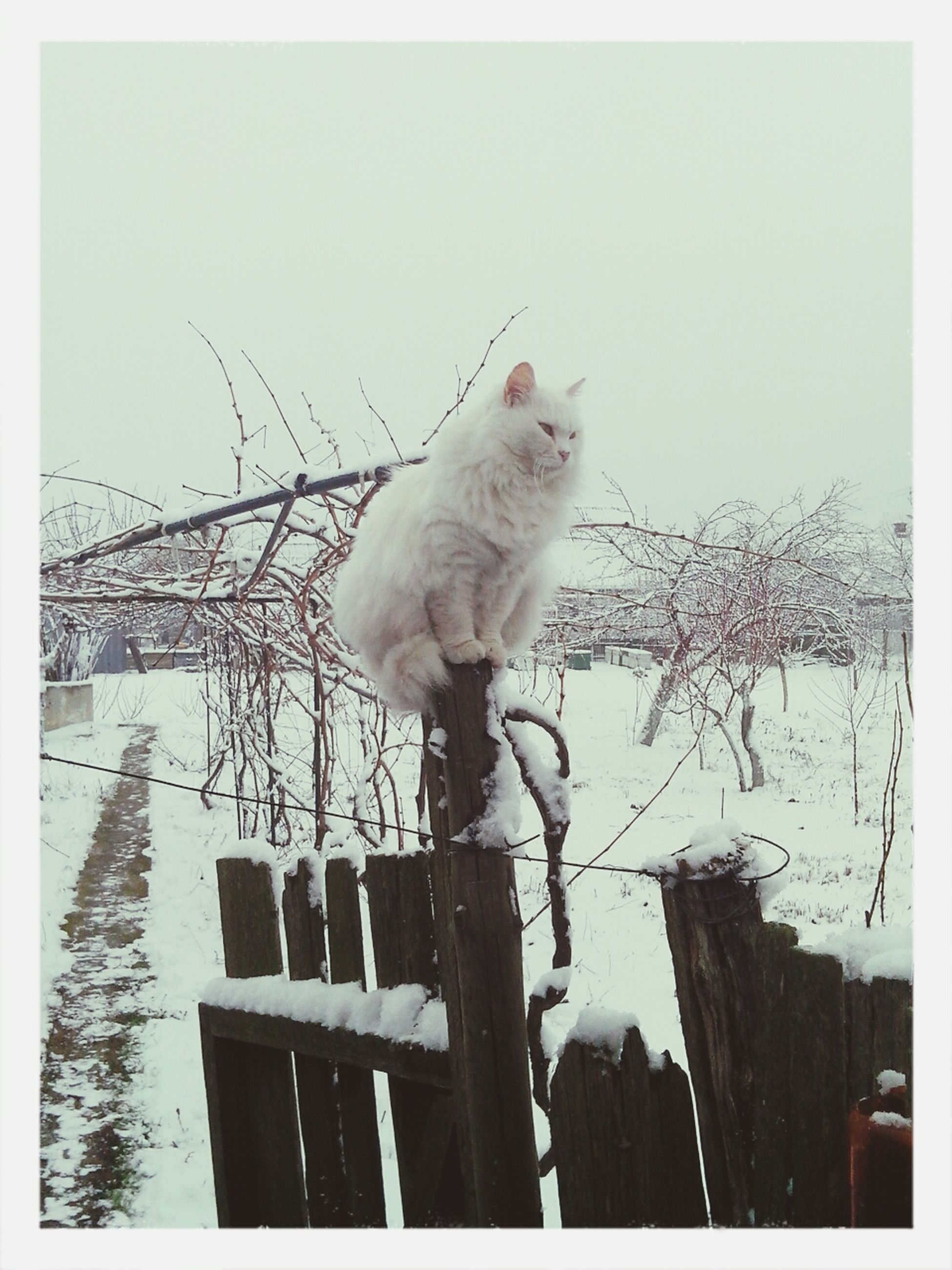 animal themes, one animal, transfer print, domestic animals, auto post production filter, mammal, pets, wildlife, bird, clear sky, low angle view, white color, animals in the wild, domestic cat, full length, sky, sitting, fence, wood - material, day